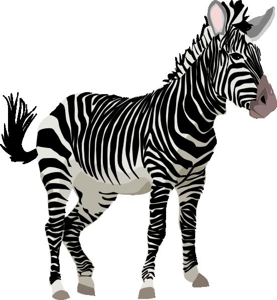 Clip Art Zebra Clipart cute zebra clipart panda free images