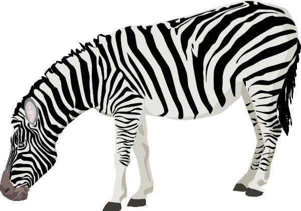 feeding zebra clip art on clipart panda free clipart images rh clipartpanda com zebra clip art free zebra clip arty