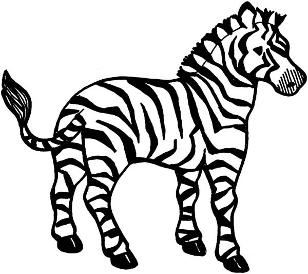 zebra coloring pages without stripes - photo #45