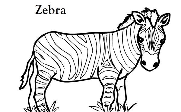 Short Zebra Coloring Page Clipart Panda